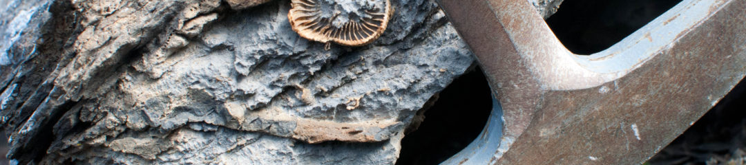 Fossilised coral